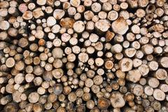 Στοιχεία συμπεριφοράς ξυλείας Στοκ Φωτογραφίες