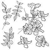 στοιχεία σχεδίου floral Στοκ εικόνες με δικαίωμα ελεύθερης χρήσης