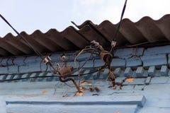 Στοιχειώδης ηλεκτρική καλωδίωση στους μονωτές κάτω από τη στέγη πλακών ενός παλαιού σπιτιού Ουρανός και μπλε ασβεστοκονίαμα σε έν στοκ εικόνες