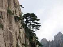 Στον απότομο βράχο του δέντρου πεύκων Στοκ εικόνες με δικαίωμα ελεύθερης χρήσης