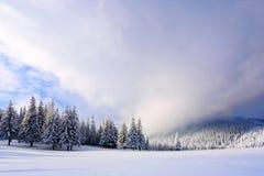 Στον ευρύ χορτοτάπητα υπάρχουν πολλά δέντρα έλατου που στέκονται κάτω από το χιόνι την παγωμένη χειμερινή ημέρα Στοκ Εικόνες