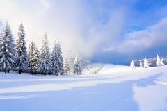 Στον ευρύ χορτοτάπητα υπάρχουν πολλά δέντρα έλατου που στέκονται κάτω από το χιόνι την παγωμένη χειμερινή ημέρα Στοκ Φωτογραφίες