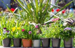 Στον κήπο στοκ εικόνα με δικαίωμα ελεύθερης χρήσης