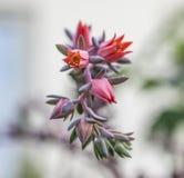 Στον κήπο, μια κινηματογράφηση σε πρώτο πλάνο των ρόδινων φίνων λουλουδιών Στοκ Εικόνα