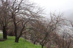 Το χιόνι πέφτει Στον κήπο τα δέντρα και η χλόη γίνονται άσπρα στοκ εικόνες με δικαίωμα ελεύθερης χρήσης