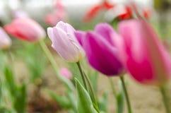 Στον κήπο Στοκ φωτογραφίες με δικαίωμα ελεύθερης χρήσης