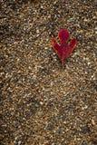 Στους βράχους Στοκ φωτογραφία με δικαίωμα ελεύθερης χρήσης