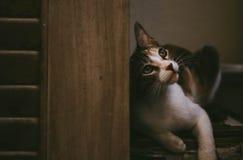 Στοχαστική γάτα στοκ εικόνες με δικαίωμα ελεύθερης χρήσης