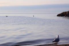 Στοχαστικό πουλί στοκ φωτογραφίες