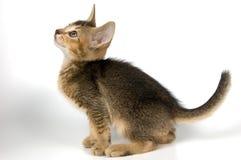 στούντιο γατακιών στοκ εικόνα