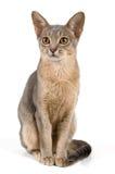 στούντιο γατακιών στοκ εικόνες με δικαίωμα ελεύθερης χρήσης