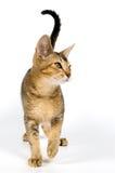 στούντιο γατακιών στοκ εικόνες