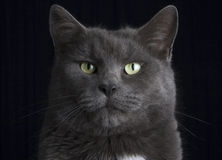 στούντιο γατών Στοκ φωτογραφία με δικαίωμα ελεύθερης χρήσης
