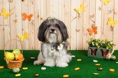 Στούντιο που πυροβολείται ενός χαριτωμένου σκυλιού στη δονούμενη σκηνή Πάσχας ανοίξεων στοκ εικόνες
