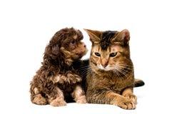 στούντιο σκυλακιών σαλονιού γατών Στοκ Εικόνες