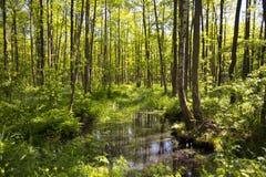 Στο δάσος, Πολωνία Στοκ φωτογραφίες με δικαίωμα ελεύθερης χρήσης