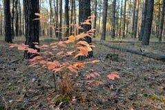 στο δάσος φθινοπώρου Στοκ Εικόνα