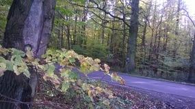 Στο δάσος Στοκ φωτογραφίες με δικαίωμα ελεύθερης χρήσης