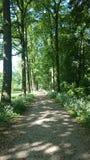 Στο δάσος στοκ φωτογραφία