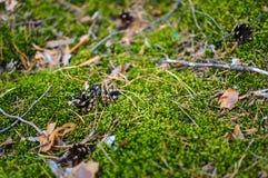 Στο δάσος Στοκ Εικόνα