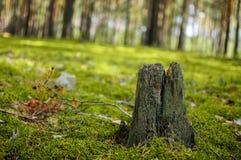 Στο δάσος Στοκ εικόνες με δικαίωμα ελεύθερης χρήσης