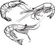 Στο άσπρο υπόβαθρο а Τυποποιημένες γαρίδες Διανυσματική απεικόνιση σχεδίων γραμμών στοκ εικόνες