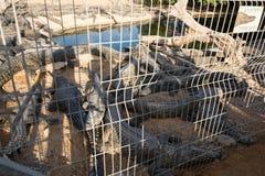 Στο αγρόκτημα κροκοδείλων Crocoloco Στοκ φωτογραφία με δικαίωμα ελεύθερης χρήσης