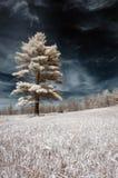 στο απομονωμένο δέντρο Στοκ Φωτογραφίες