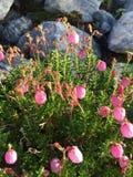 Στο βουνό Στοκ εικόνα με δικαίωμα ελεύθερης χρήσης