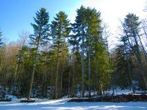 Στο δάσος στοκ εικόνα με δικαίωμα ελεύθερης χρήσης