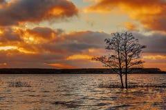 Στο δέντρο Στοκ φωτογραφίες με δικαίωμα ελεύθερης χρήσης