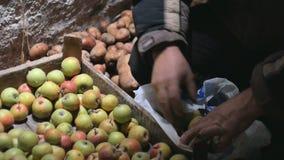 Στο κελάρι το πρόσωπο κερδίζει τα μήλα των κλουβιών απόθεμα βίντεο