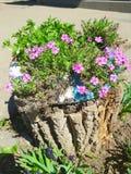 Στο κολόβωμα καφετιού, ένας μεγάλος αριθμός μικρών μωβ λουλουδιών αυξάνεται με τις πράσινες εγκαταστάσεις Στοκ Φωτογραφίες