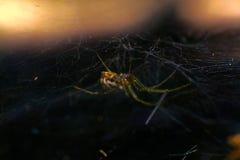 Στο κρησφύγετο της αράχνης στοκ φωτογραφίες με δικαίωμα ελεύθερης χρήσης