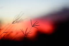 Στο κόκκινο Στοκ φωτογραφίες με δικαίωμα ελεύθερης χρήσης