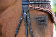 Στο μάτι του αλόγου Στοκ Εικόνες