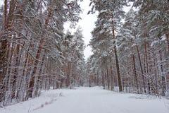 Στο Μαύρο οι κλάδοι του δέντρου βρίσκονται ένα παχύ στρώμα του χιονιού lo Στοκ Εικόνες