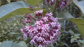 Στο πάρκο Λουλούδι, φύλλα, χλόη και έντομα NJ, ΗΠΑ Ð « Στοκ Εικόνες