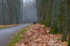 Στο πάρκο φθινοπώρου στον πάγκο Στοκ φωτογραφία με δικαίωμα ελεύθερης χρήσης