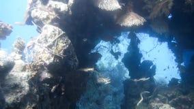 Στο παγκόσμιο υποβρύχιο παρατηρητήριο κοραλλιών σε Eilat απόθεμα βίντεο