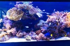 Στο παγκόσμιο υποβρύχιο παρατηρητήριο κοραλλιών σε Eilat Στοκ Φωτογραφίες