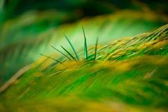Στο πράσινο φύλλο εστίασης Στοκ Εικόνα