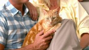 Στο σε αργή κίνηση ευτυχές ζεύγος με τη γάτα απόθεμα βίντεο