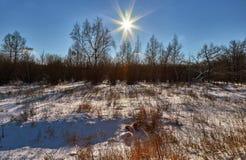 Στο χειμερινό δάσος Στοκ Φωτογραφία