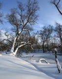 Στο χειμερινό δάσος Στοκ Εικόνες