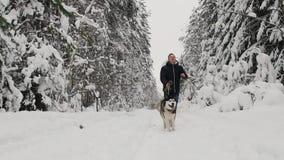 Στο χειμερινό δάσος, ένα άτομο σε ένα μαύρο σακάκι και τρεξίματα τζιν με ένα σιβηρικό γεροδεμένο σκυλί, ένας σε αργή κίνηση πυροβ απόθεμα βίντεο
