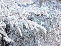 Στο χειμερινό δάσος οι κλάδοι των δέντρων καλύπτονται με το χιόνι στοκ φωτογραφία με δικαίωμα ελεύθερης χρήσης