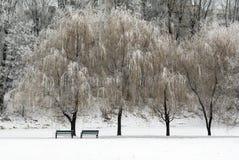 Στο χειμερινό πάρκο Στοκ εικόνα με δικαίωμα ελεύθερης χρήσης