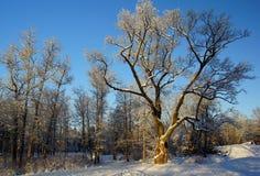 Στο χειμερινό πάρκο Στοκ εικόνες με δικαίωμα ελεύθερης χρήσης