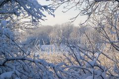 στο χειμώνα παραθύρων Στοκ εικόνες με δικαίωμα ελεύθερης χρήσης